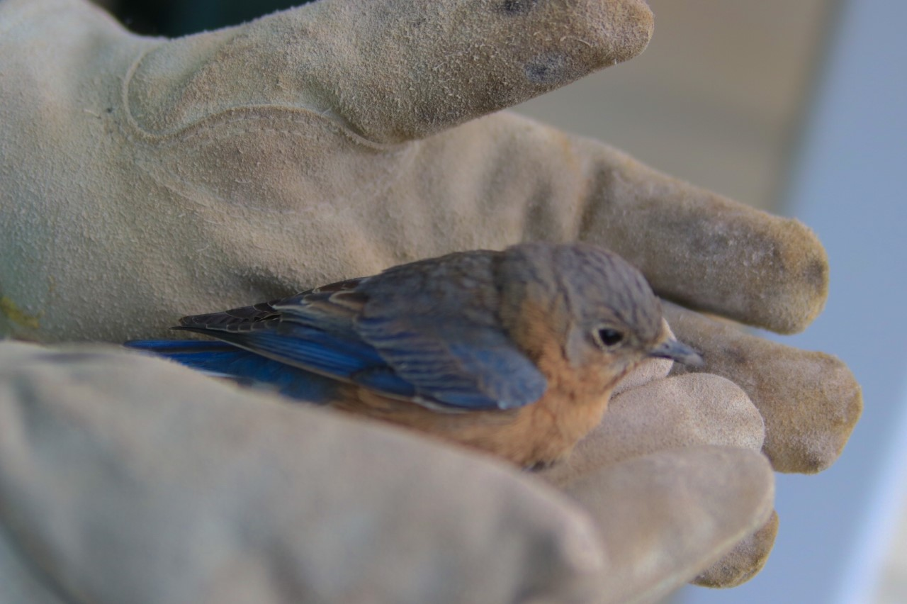6 Karis Bird Rescue